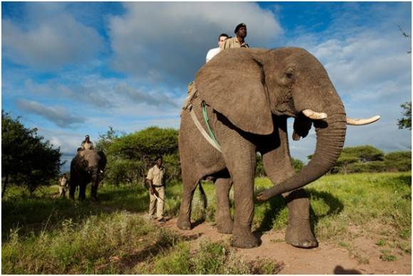 South African Safari (creative commons)