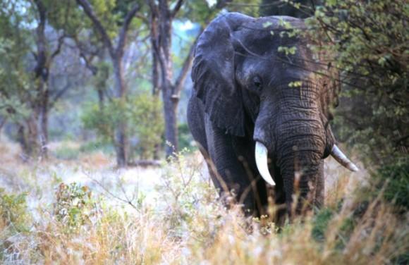 African safari (Creative Commons)